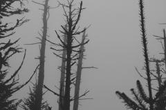 SmokyMountains_12